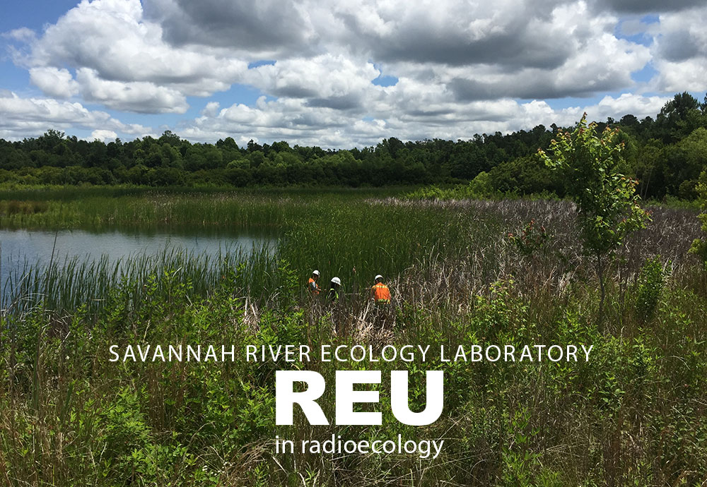 Savannah River Ecology Laboratory REU in Radioecology - students working in wetland